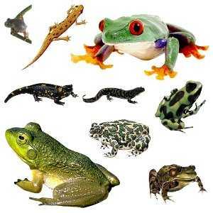 Это тритоны, жабы, лягушки, черепахи, ящерицы и змеи